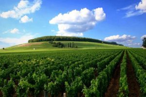 Green landscape in Burgundy