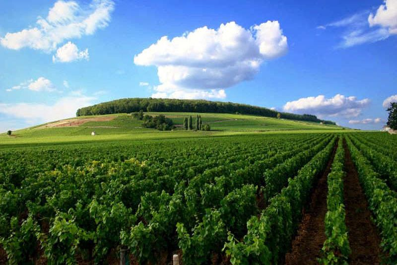 Green landscape in Burgundy